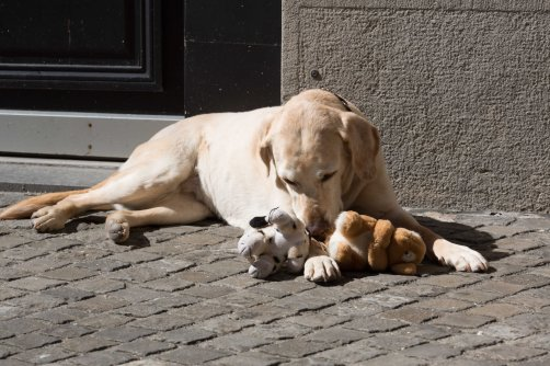 Joy - with her toys in Zurich